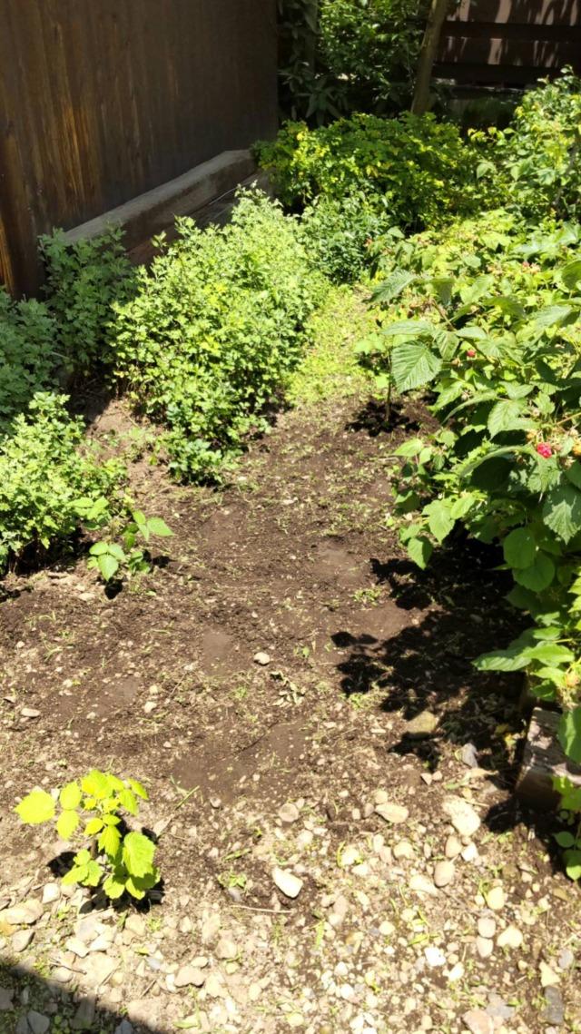 お庭の草取りのご依頼を実施いたしました